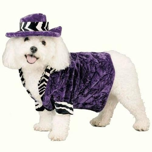 PIMP DADDY DOG Costume & HAT-PURPLE WHITE ZEBRA