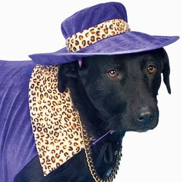 PIMP DADDY DOG Costume & HAT-PURPLE PANTHER back
