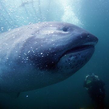 BIG FISH! TOY MACHINE T-SHIRT label