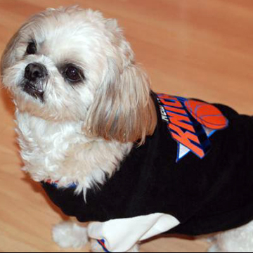 NBA NY KNICKS Pet Dog  JACKET a.k.a 犬のスタジャン label